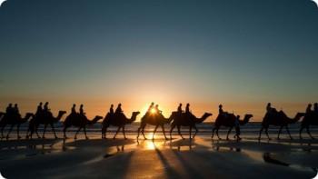 Экскурсии на верблюдах в пустыню