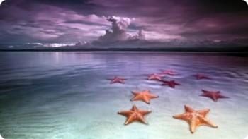 Бокас дель Торо пляж морских звезд